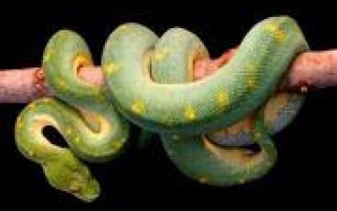 activity Ile aux serpents et volcan de boue