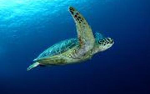 activity Plage aux tortues de Rantau Abdang