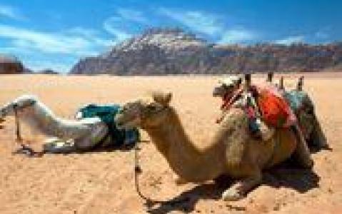 activity A dos de chameau dans le désert