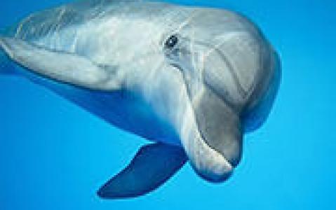activity A la rencontre des dauphins et de la baleine bleue