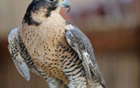 activity Observation des oiseaux