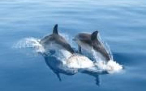 activity A la rencontre des dauphins - Archipel de Zanzibar