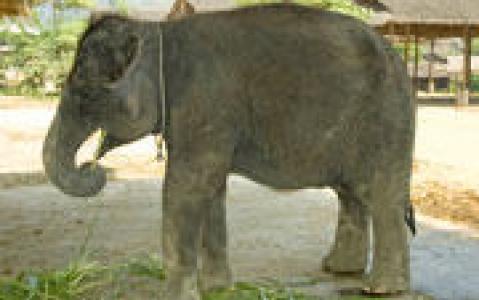 activity Visite d'un camp d'éléphants