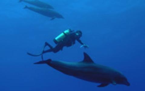 activity Le Moorea Dolphin Center