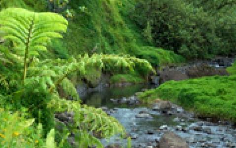 activity Randonnée pédèste guidée à la vallée de la Fautaua