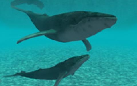 activity Rencontre avec les dauphins et les baleines