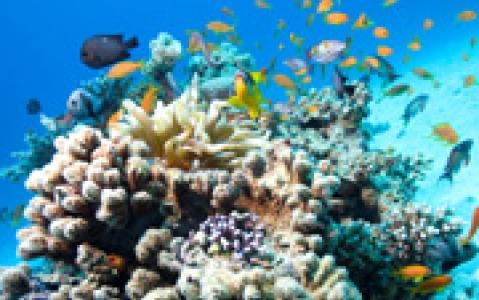activity Tour ecologique du récif corallien