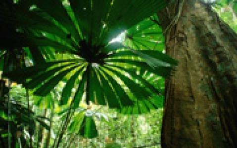 activity Au cœur de la végétation luxuriante