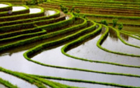 activity Ecotrek dans les rizières