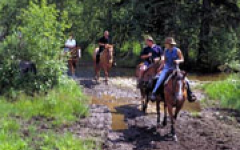 activity Equitation