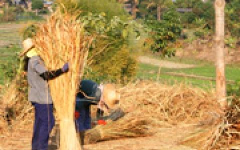 activity Initiation à l'agriculture vietnamienne (Tra Que)