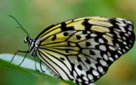 activity  La ferme aux papillons