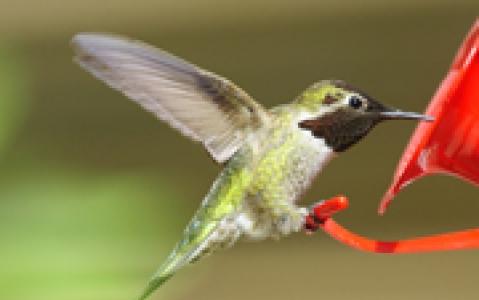 activity Le Parc aux oiseaux