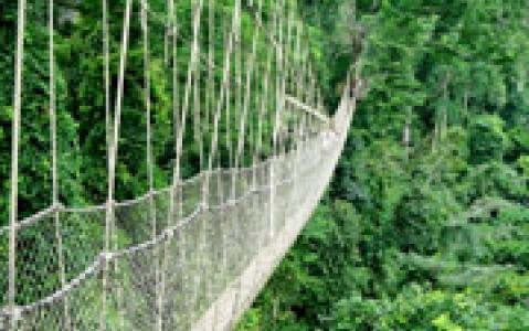 activity Ponts supendus d'Arenal