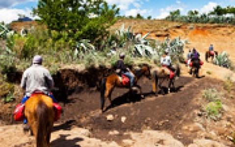 activity Promenade à cheval - Sarraméa