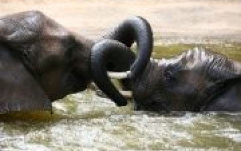 activity Vos activités safaris à Niassa