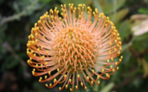 activity Jardins botaniques de Kirstenbosch