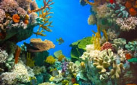 activity Two Oceans Aquarium au Cap