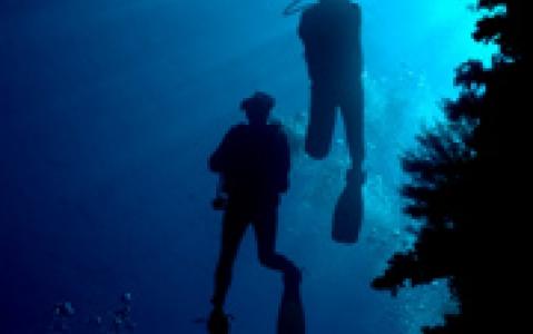 activity Plongée sous-marine et snorkeling - Mombasa