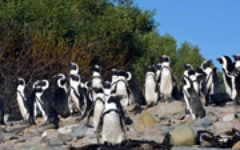 activity Visite de Robben Island