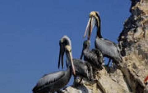activity Excursion aux îles Ballestas