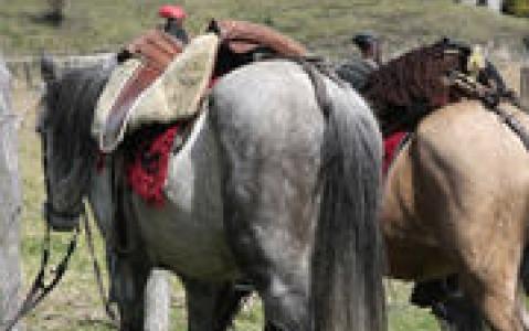 activity Randonnée à cheval à Chugchilan