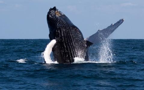 activity Observation des baleines en Colombie