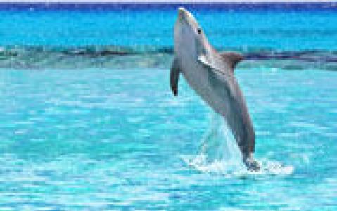 activity Observez des dauphins et des baleines