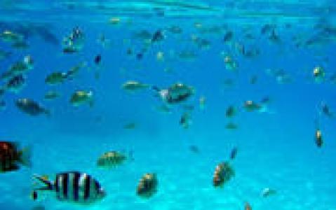 activity Aquablue exploration