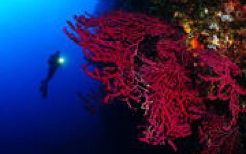activity Observation sous-marine à la passe Tiuta en plongée libre