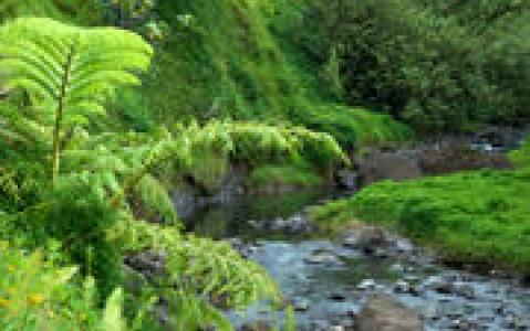 activity Randonnée pédestre guidée à la vallée de la Fautaua