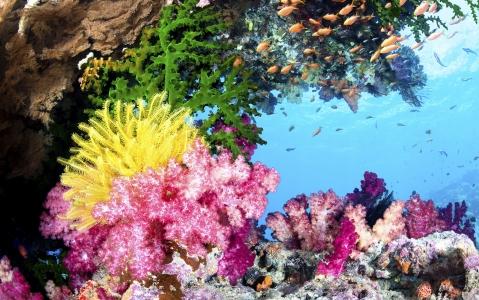 activity Découverte du Jardin de Corail à la Passe Nord
