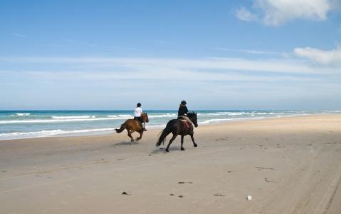 activity Randonnée à cheval
