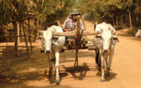 activity Balade en chars à bœufs