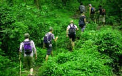 activity Randonnée dans la jungle vers la rivière aux Mille Lingams