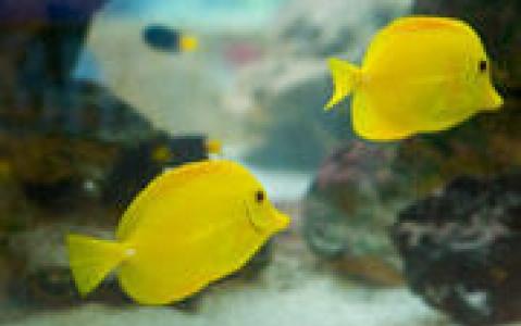 activity Visite de l'Aquarium de Bangkok