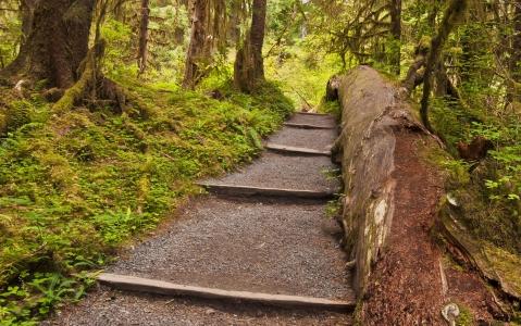 activity Balade dans la Hoh Rain Forest