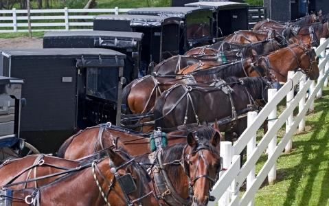 activity Rencontre avec la communauté Amish du comté de Lancaster