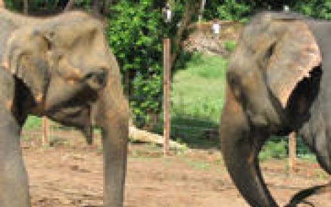 activity Excursion à dos d'éléphants