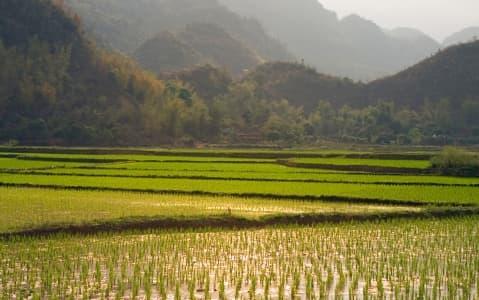 hotel Ferme du Colvert - Fleurs de Lilas - Hoa Tuong Vi