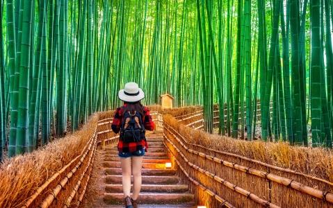 activity Visite d'Arashiyama et Sagano