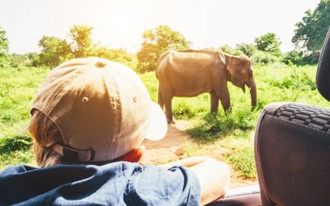activity Safari Masai Mara