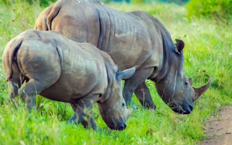activity Safari Nairobi