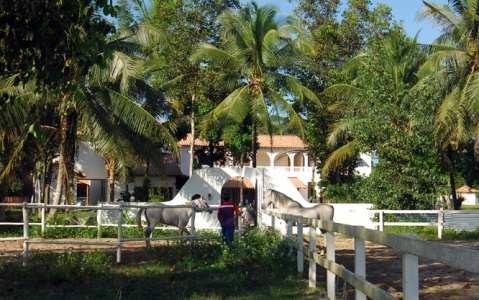 hotel Casa Titik - Cherating