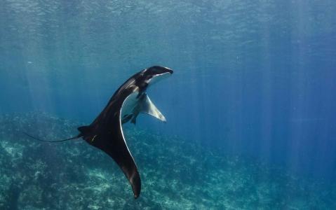 activity Plongée dans la Mer de Cortés