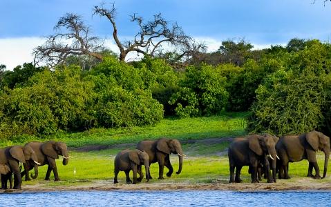 activity Les activités safari Okavango et Chobe proposées par les lodges