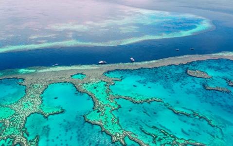 activity Croisière snorkeling sur la Grande Barrière de Corail