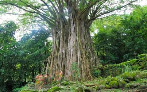 activity Vallée de Hatiheu - Journée complète, déjeuner inclus