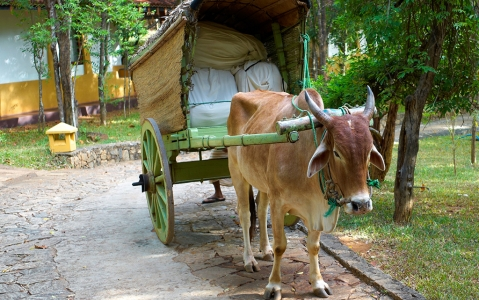 activity Excursion au village typique d'Ehelagala