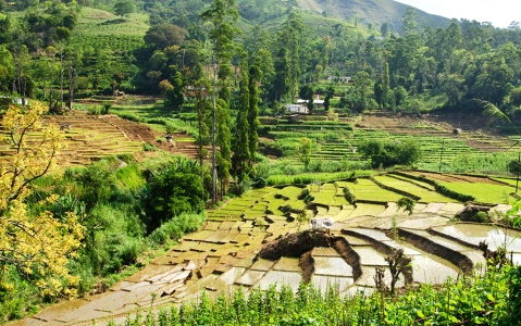 activity Visite d'une rizière